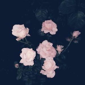 等爱的玫瑰 做你的爱人 等爱的玫瑰(最新嘉宾开场舞曲资料,滚动制作)